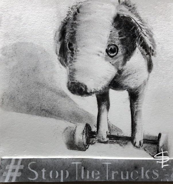#dessin #message #stopthetrucks #chagrin